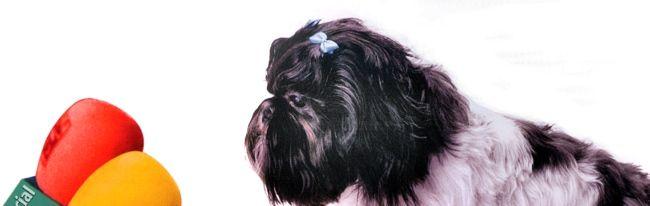 Glasnogovornik pas