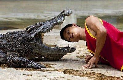 Trener krokodila