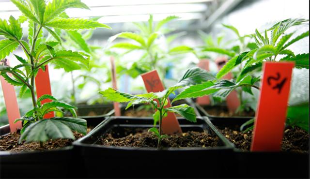 Je li u 'travi' budućnost naše izvozne industrije? Evo kako smo na 'mala vrata' dobili jedno od najprogresivnijih zakonskih rješenja na svijetu