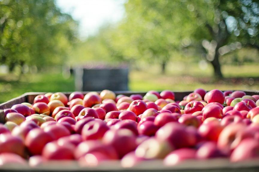 Mladim poljoprivrednicima 45,7 milijuna kuna