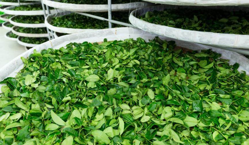 Investicija od 28 milijuna kuna: Otvorena najveća tvornica čajeva u regiji