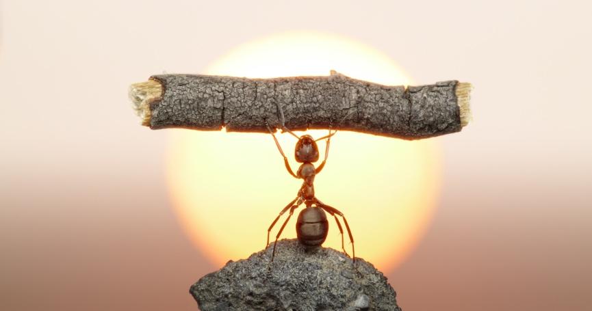 Bio je vrijedan i sretan: Kako je mrav dobio otkaz?