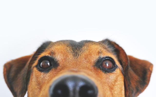 Kazne za napuštanje životinja penju se i do 30.000 kuna