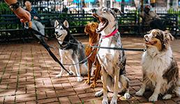 Zagrepčanka šetanje pasa pretvorila u ozbiljan biznis