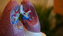 Koronavirus, čini se, ostavlja trajne posljedice, tvrde znanstvenici