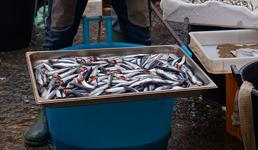 Zbog pandemije lovostaj u travnju: 'Ako država ne pomogne, ribari će morati prodati brodove'