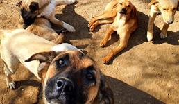 Napuštenim psima i mačkama nužna pomoć građana