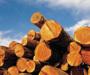 Drvoprerađivačkoj industriji prijeti kolaps