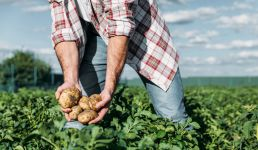 Zemlje EU nezaposlene hitno prebacuju u poljoprivredu, da je spase
