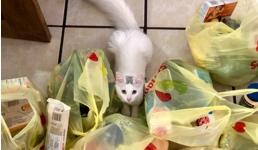 'Zabrana plastičnih vrećica nanijela bi dodatan udarac hrvatskom gospodarstvu'