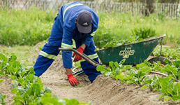Hrvatska ima dovoljno nezaposlenih za sezonski rad u poljoprivredi