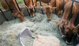 Vlasnici ove male poljoprivredne tvrtke u Lipiku sami su radnici