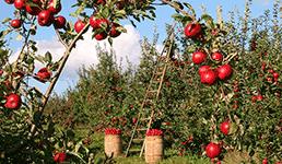 'Domaća poljoprivreda ima ogroman potencijal, a sada i priliku za zaokret'