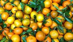 Traže se radnici za berbu mandarina, dnevnica 90 kuna?! 'Ma nema ništa, Hrvati ne žele raditi, samo se žale'
