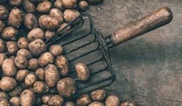 Proizvođači krumpira prijavljuju velike viškove, traže intervenciju države
