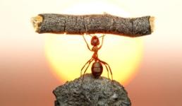 Bio je presretan i jako vrijedan: Kako je mrav dobio otkaz?