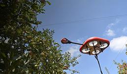 Izraeski AI roboti beru voće i sprečavanju njegovo propadanje