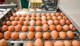 U farmu kokoši nesilica u Ivanić Gradu investirano 60 milijuna kuna