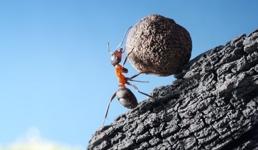 Bio je presretan i jako vrijedan: A kako je onda taj isti mrav dobio otkaz?