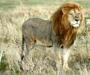 Direktori iz Afrike puno zabrinutiji za bioraznolikost od europskih direktora