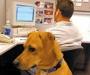 Ako možete, povedite psa na posao i smanjite stres