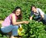 Britanski farmeri žele da im Hrvati dođu brati voće i povrće