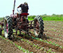 Dalmatinci pretekli Slavonce u poljoprivredi