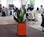 Biljke u uredu pomažu u podizanju učinkovitosti
