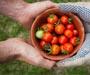 Hrvatska sramota: Dok domaće povrće propada, uvozi se četiri puta skuplje